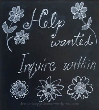 help wanted sign chalkboard